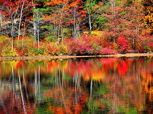Water reflecting the Autumn colors.