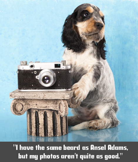 Dogs love photos too you know.
